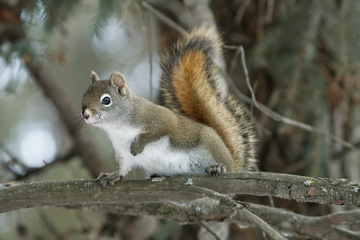 I know, another squirrel photo but....