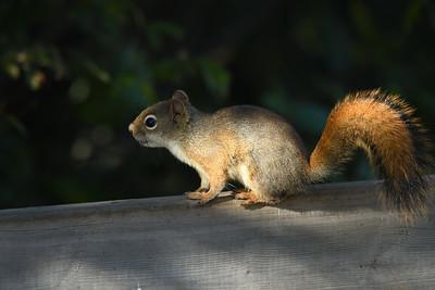 Tail lght