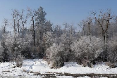 Spring hoar frost
