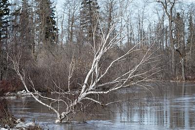 Drowning Tree