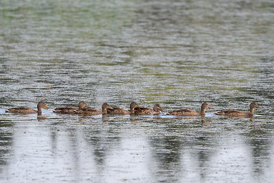 Getting the ducks in a row