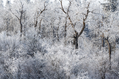 Frost (2)