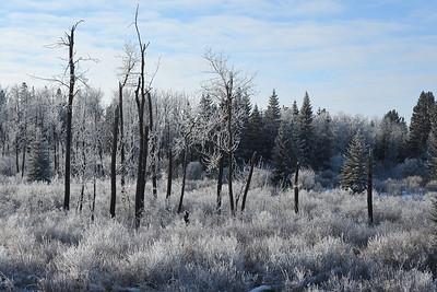 Winter frost (8)