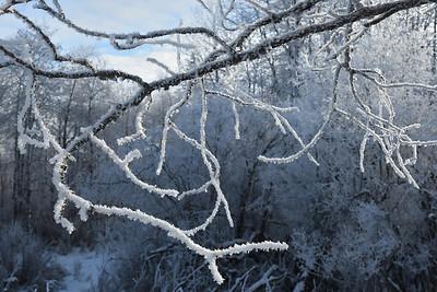 Winter frost (7)