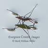 Water skimmer (1)