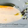 Water skimmer (3)