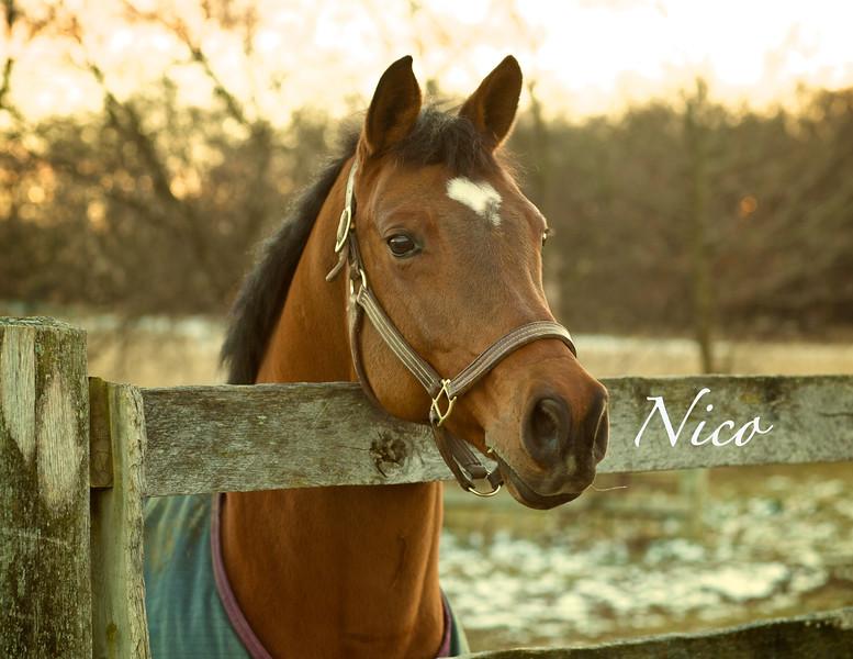Nico May
