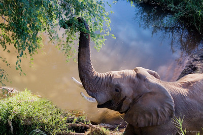 This young adult elephant was right below us as we stood on a bridge. (Kruger National Park)