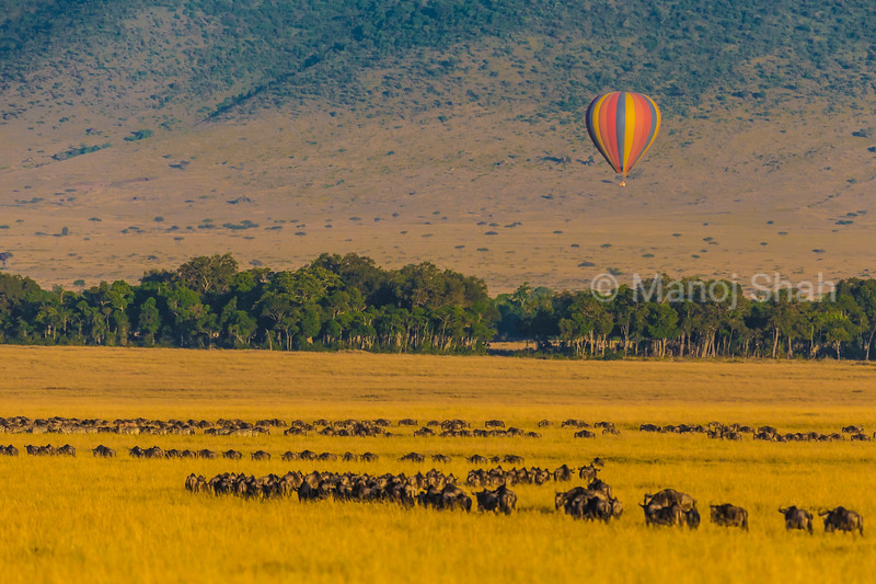 Masai Mara wildebeest migration and hot air baloon