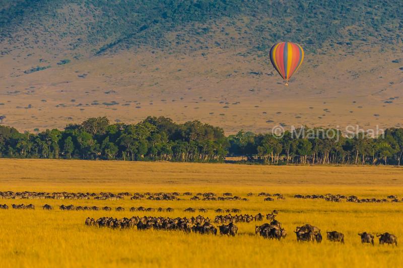Masai Mara wildebeest migration and hot air baloon