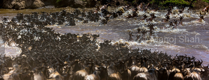 Topi and Wuldebeest cross Mara River.