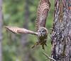 Silent Hunter in flight 2