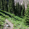 The trail leading back below the timberline.