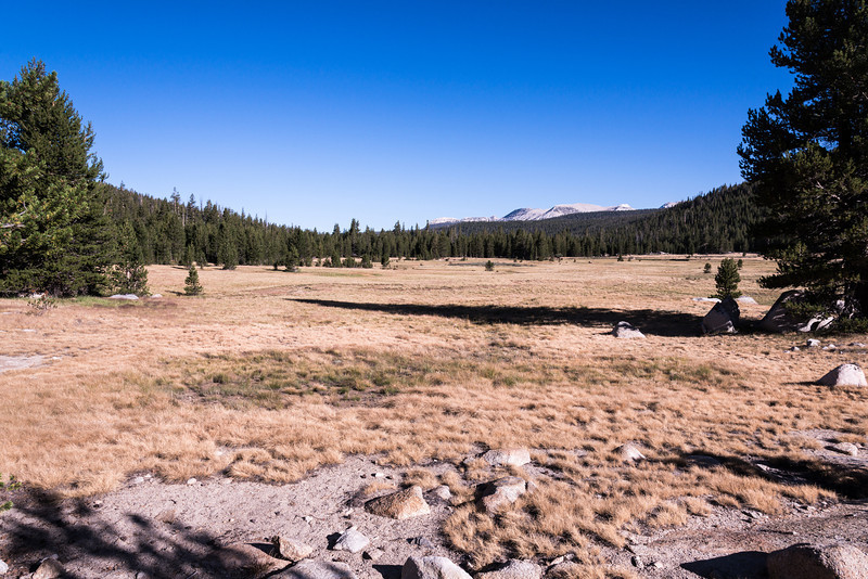 Looking back towards Tuolumne Meadows.