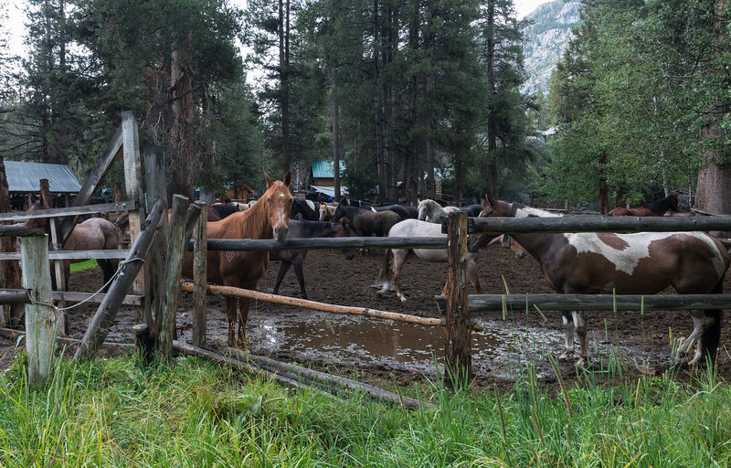 Horses in the corral.