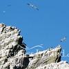 Skellig Islands Aug 2014 RS 52