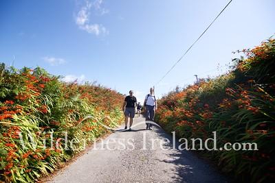 Sherkin Island Aug 2014 RS 22