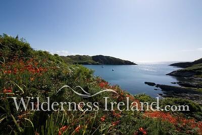 Sherkin Island Aug 2014 RS 13
