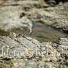 Skellig Islands Aug 2014 RS 47