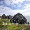 Skellig Islands Aug 2014 RS 25