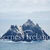Skellig Islands Aug 2014 RS 26