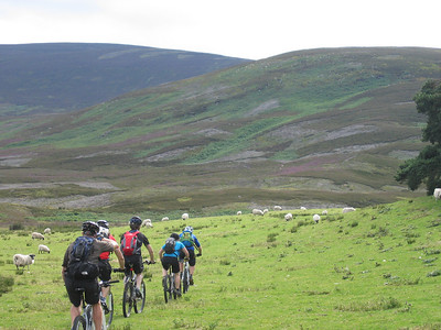 Into the hills - sheep-cut singletrack leads the way to the Fungle Road.