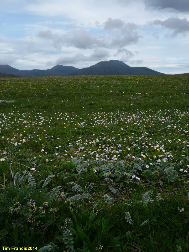 d2 - the machair of the Uists.