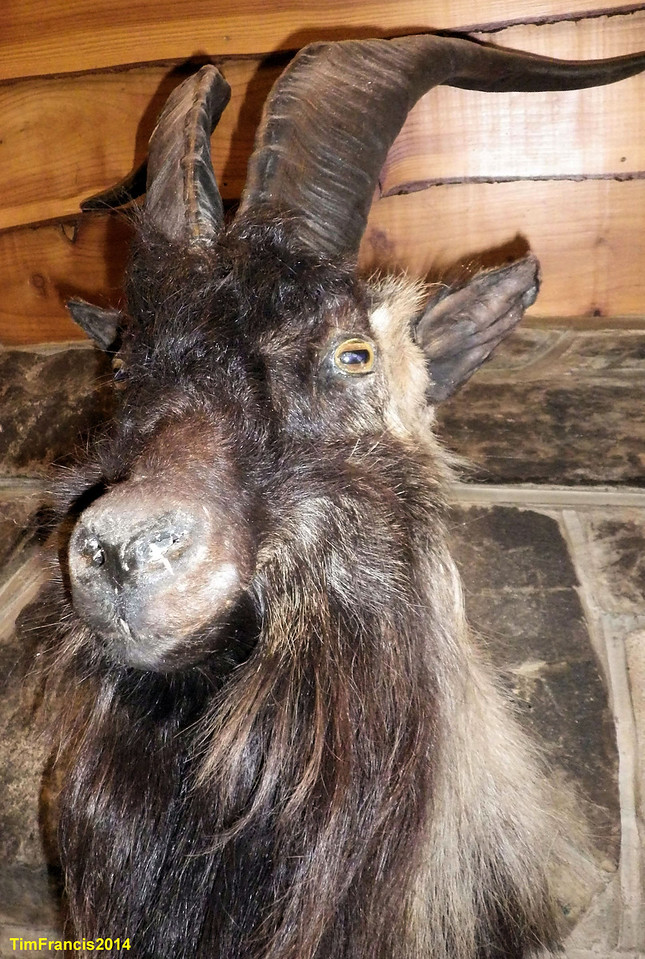Ghost - I thought you said goat!! The Old Forge Inn, Knoydart.