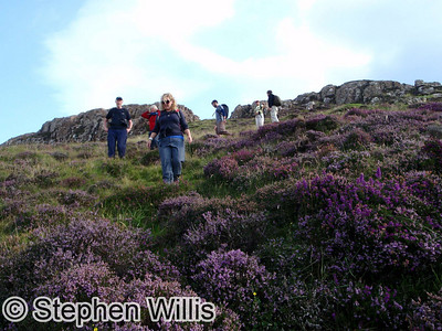 Amongst the blooming heather on Muck