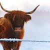 Winter Highland Rupert Shanks 1324