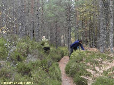 Blaeberry hunting