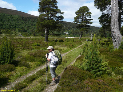 Glen Feshie just has to be a Highlands Shangrila.