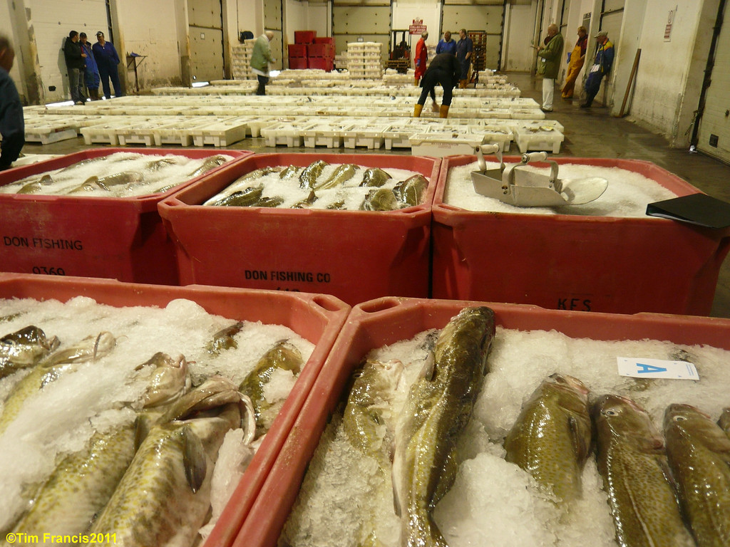 Kinlochbervie fish market.