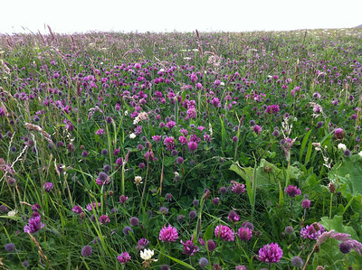 Northton Machair