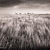 Photos from Kenya's Masai Mara
