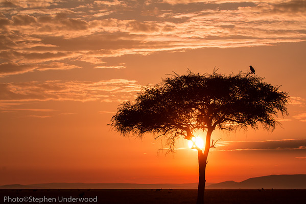 Photography from the Masai Mara, Kenya