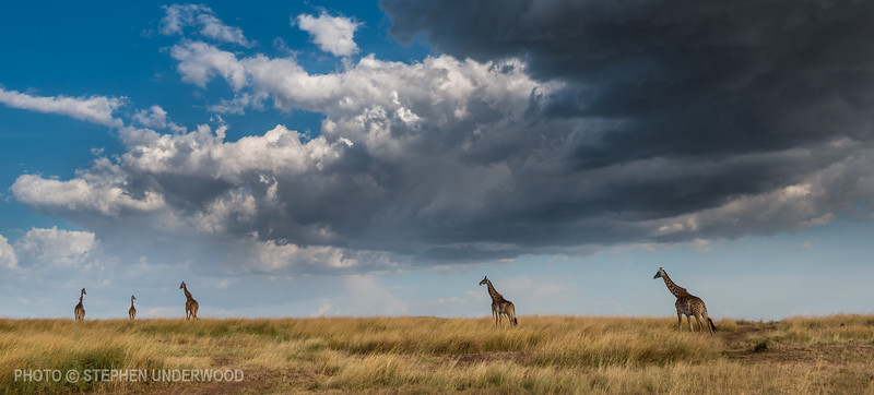 Photography from Kenya's Masai Mara