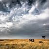 Photography from the Masai Mara, Kenya
