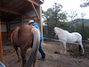 They just moved to a ranch off the grid in the mountains; have two horses