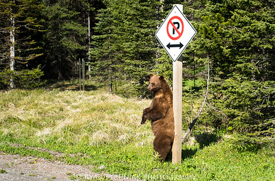 Bear in mind that when you disobey the parking rules in Waterton this summer, there are some new recruits issuing tickets.