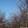 WJB_2009_03_23_246