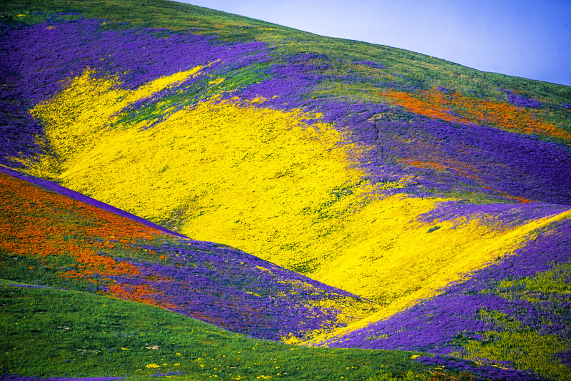 Superbloom Carrizo Plains National Monument Tembler Range Desert Spring Wildflowers Fine Art Photography 45EPIC Dr. Elliot McGucken Fine Art Landscape and Nature Photography!  God Spilled a Bucket of Paint!