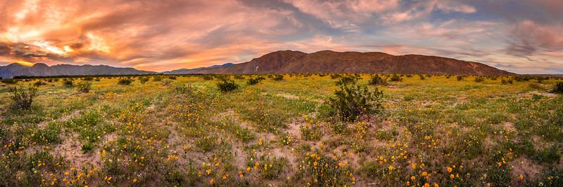 Anza Borrego Desert Spring Wildflowers Fine Art Photography 45EPIC Dr. Elliot McGucken Fine Art Landscape and Nature Photography! San Diego!