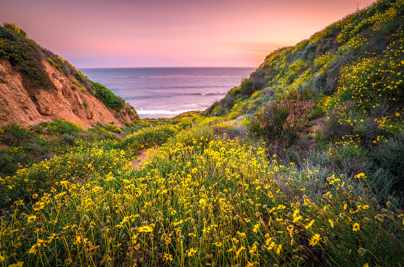 Malibu California Spring Wildflowers Fine Art Photography 45EPIC Dr. Elliot McGucken Fine Art Landscape and Nature Photography!  God Spilled Paint!