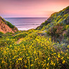 Malibu California Spring Wildflowers Fine Art Photography 45EPIC Dr. Elliot McGucken Fine Art Landscape and Nature Photography!  God Spilled Paint!