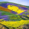 Superbloom Carrizo Plains National Monument Tembler Range Desert Spring Wildflowers Fine Art Photography 45EPIC Dr. Elliot McGucken Fine Art Landscape and Nature Photography!  God Spilled a Bucket of Paint!