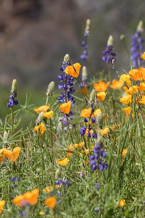 Wildflowers 2016