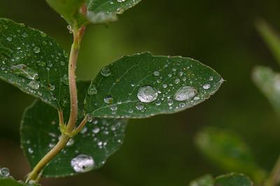 Leafy Pearls