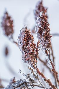 Frozen Sumac