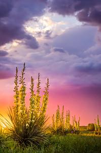 Stormy Spring Sunrise